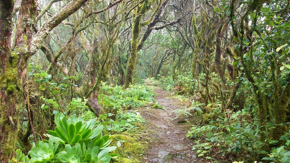 Wanderungen im Biosphärenreservat Anaga-Gebirge
