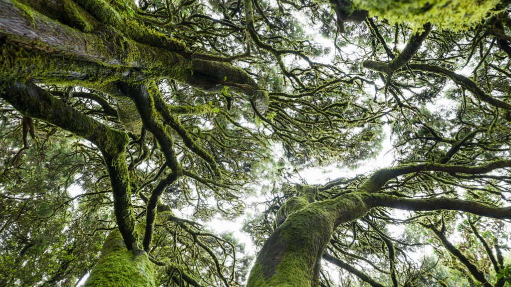 Mit jeder Buchung Bäume pflanzen